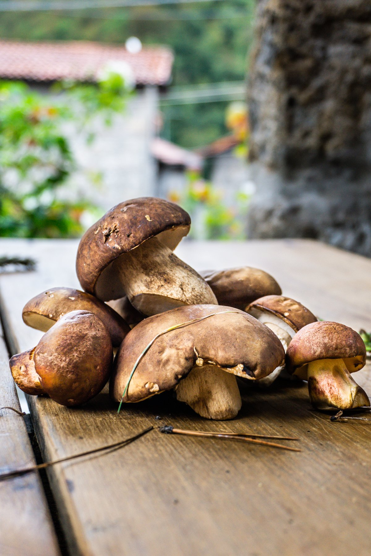 Wild mushrooms on a wooden table with greenery in the background