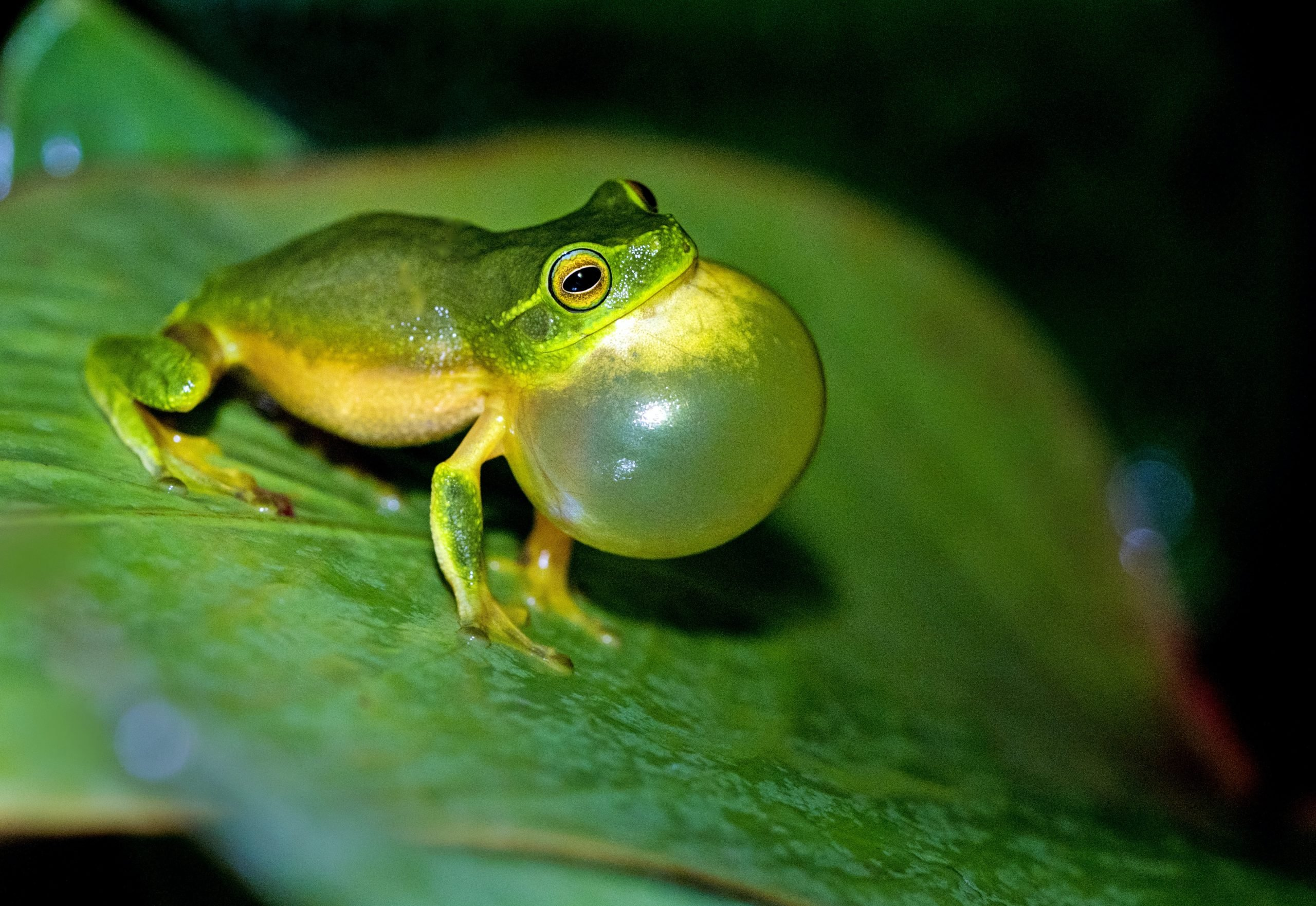 """Frog bursting a bubble siting on a leaf a picture for the post """"how I manage my anxiety"""""""