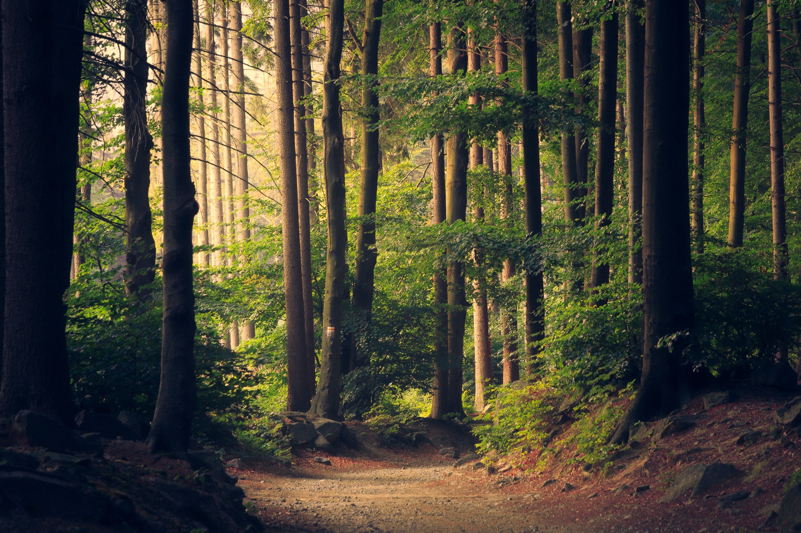 """Forest world a picture for the post """"how I manage my anxiety"""""""