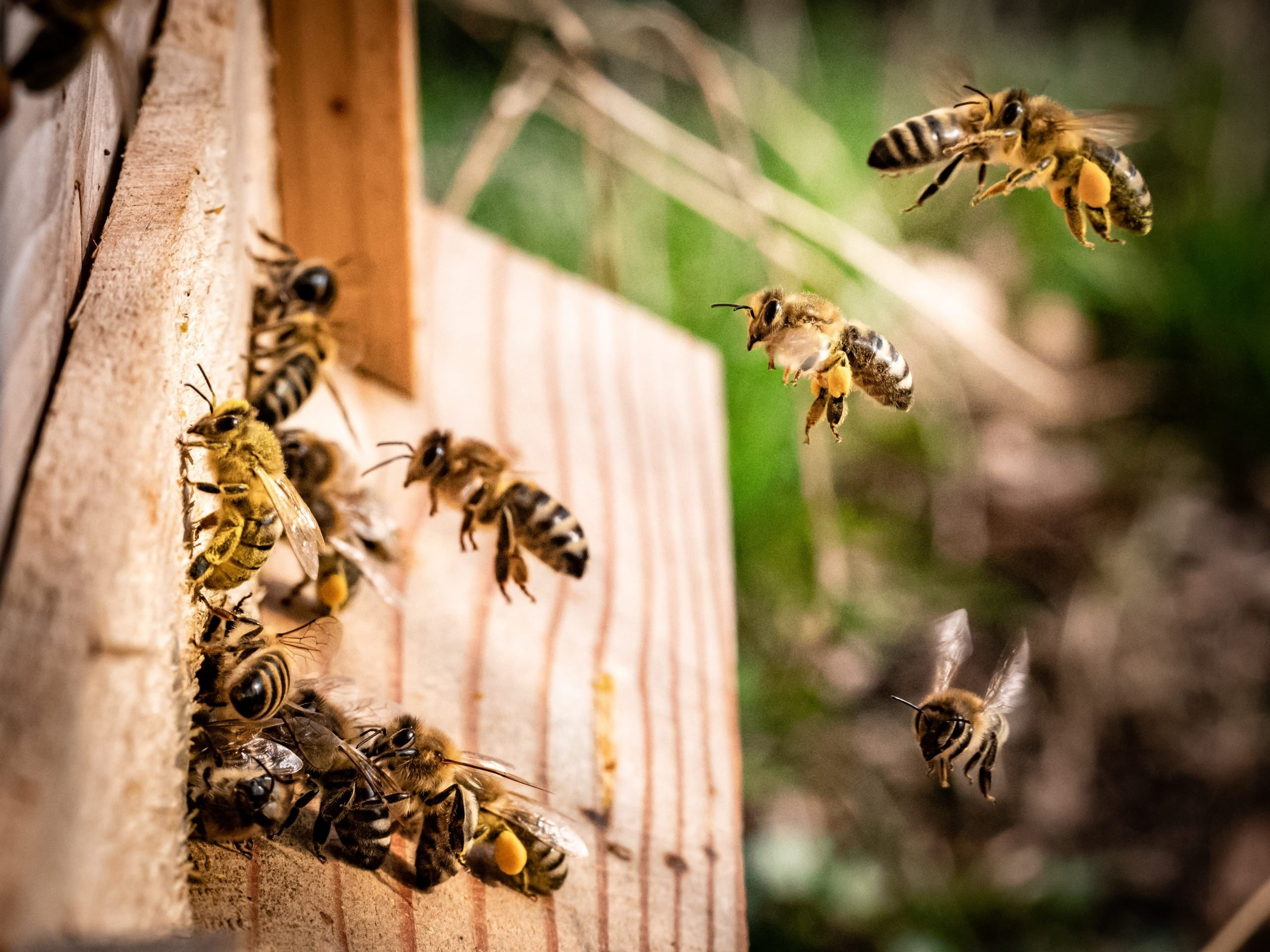 A beehive at their home starting to fly