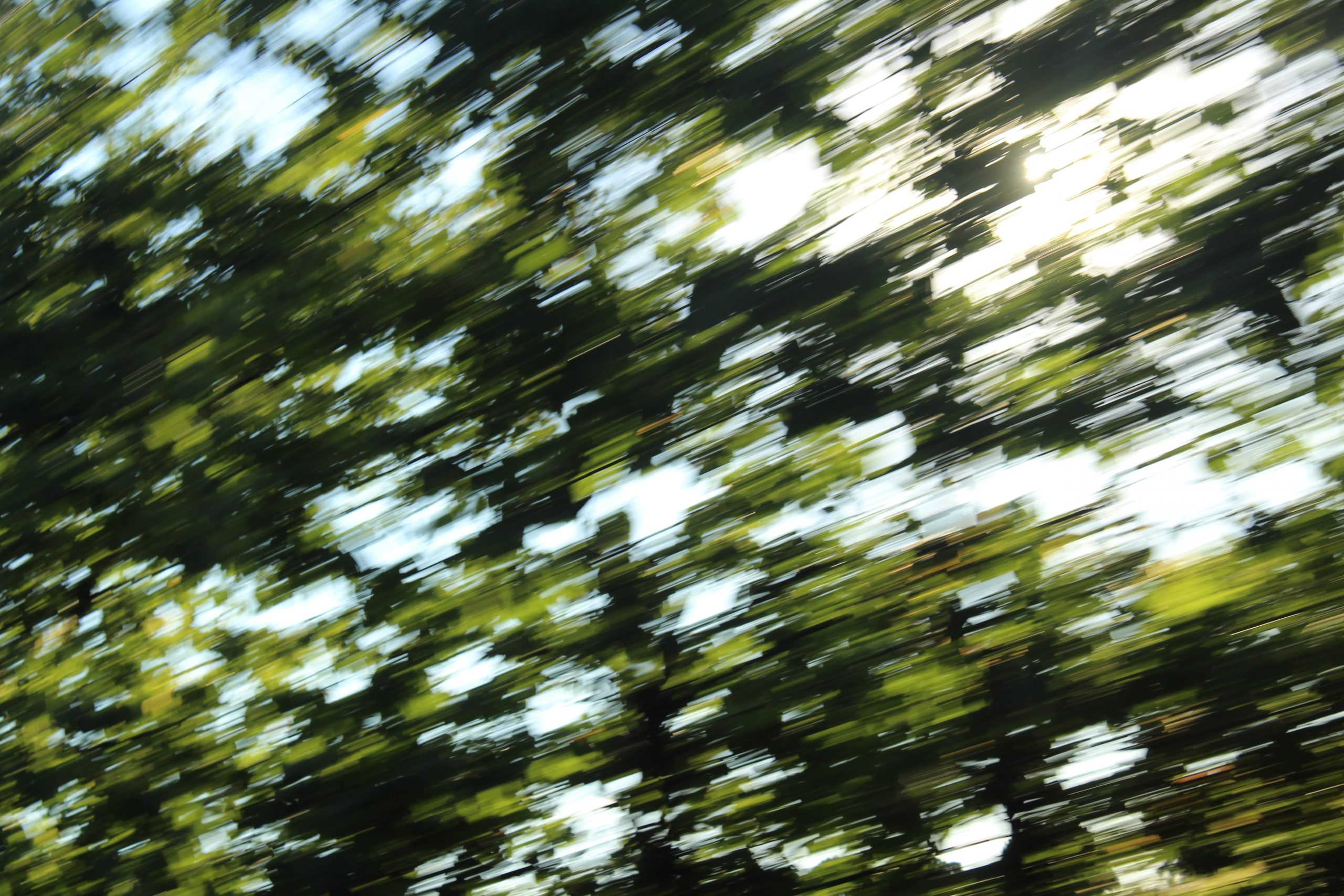 Speeding past leaves with the sun shining through