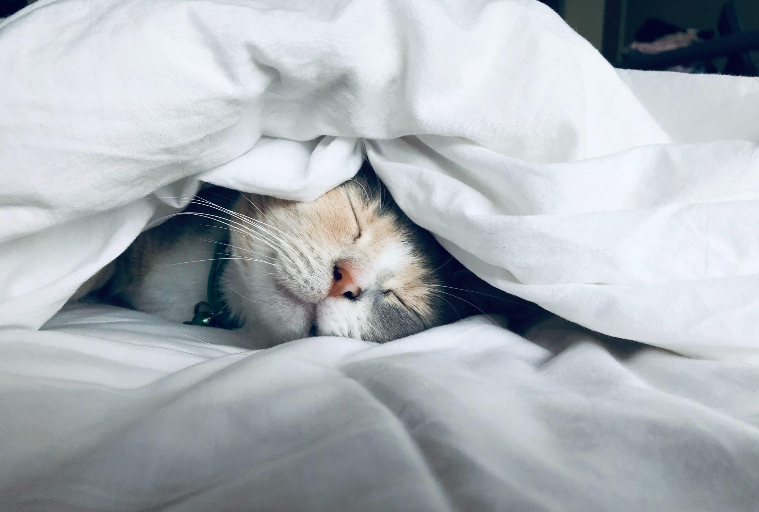 Cat lying under the blankets enjoying a sleep