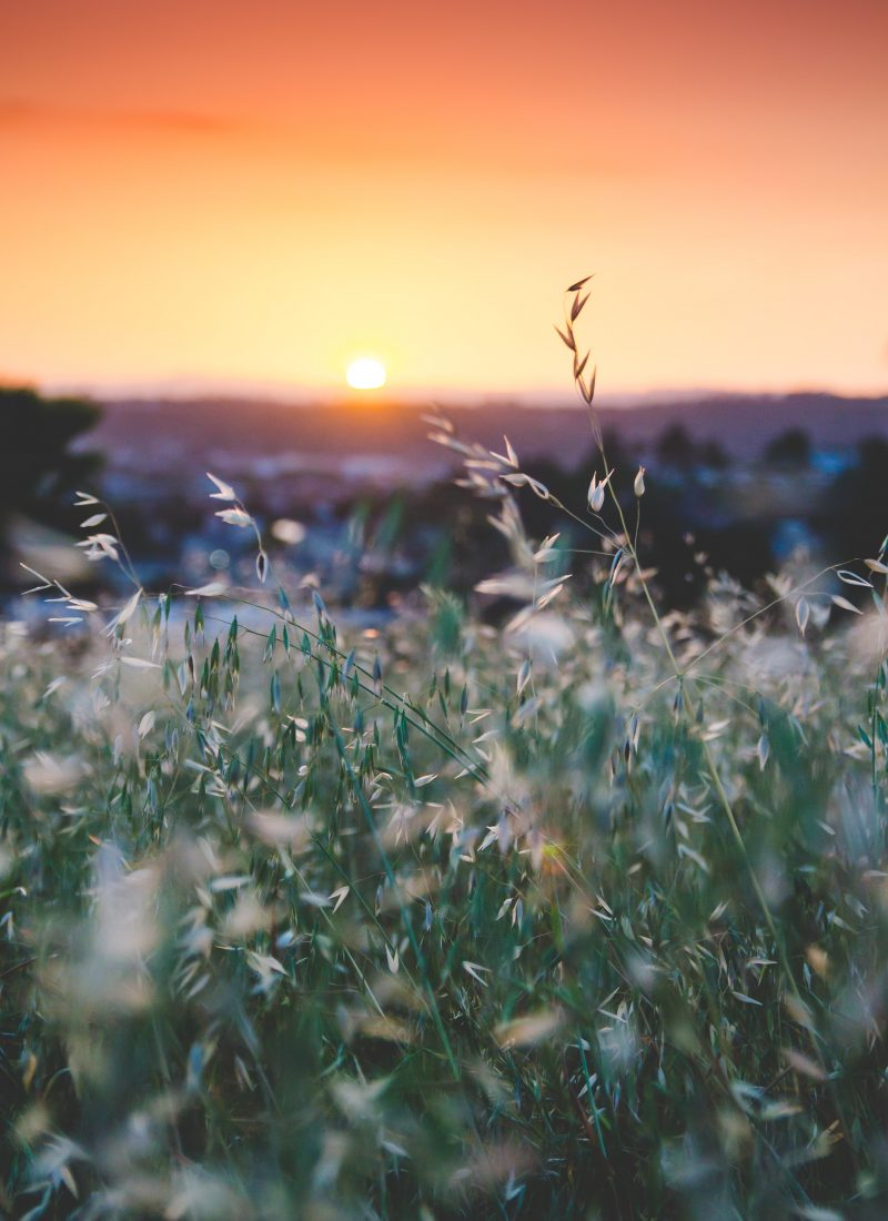 Sunrise with grass in focus